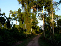 Vieng Poukha, Don Bor Kung Forest